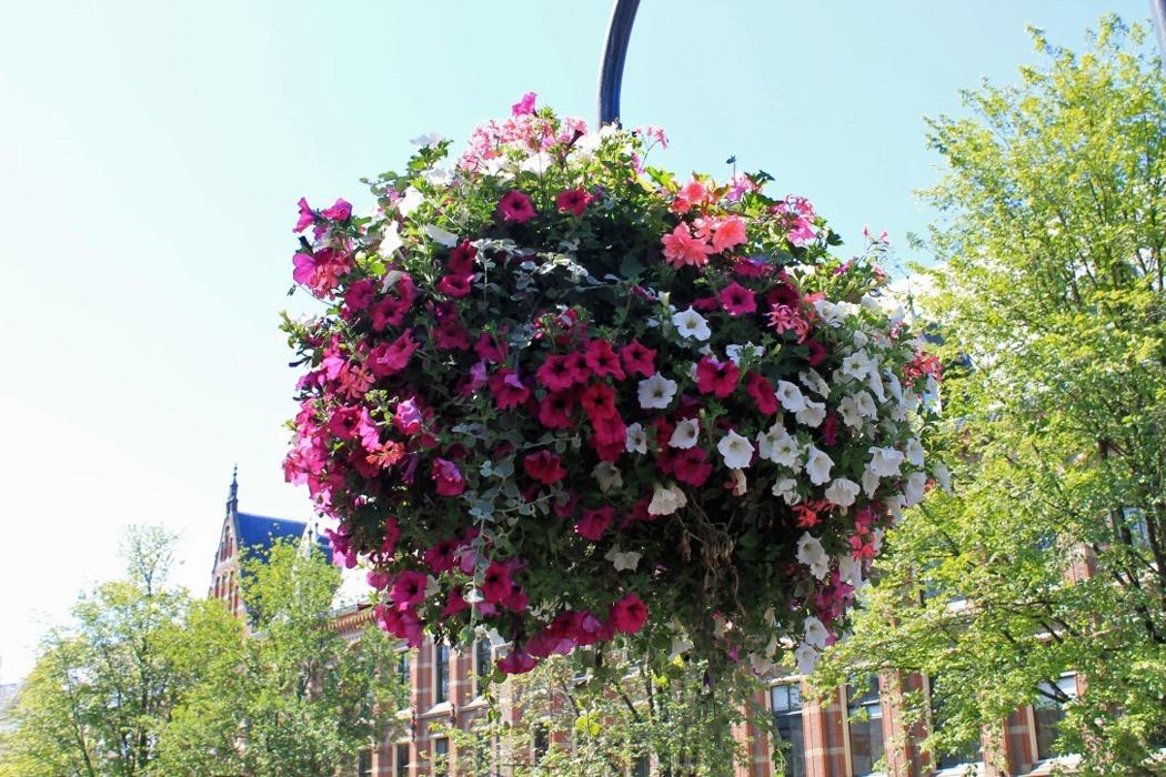 Amsterdam Blumen 1