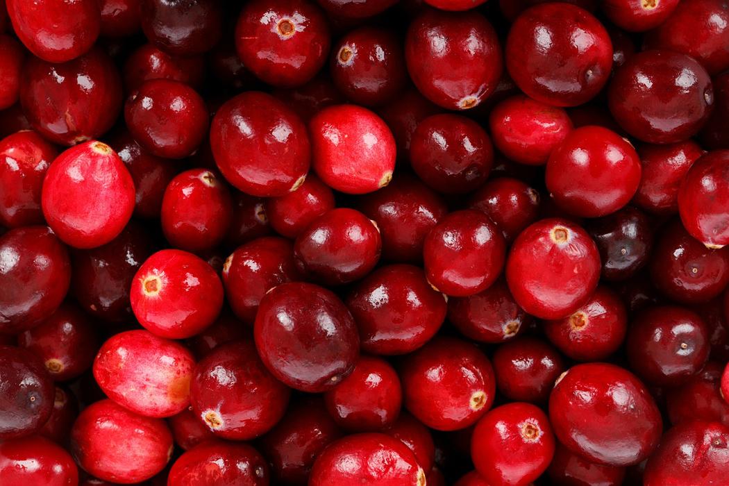 Frische Cranberries