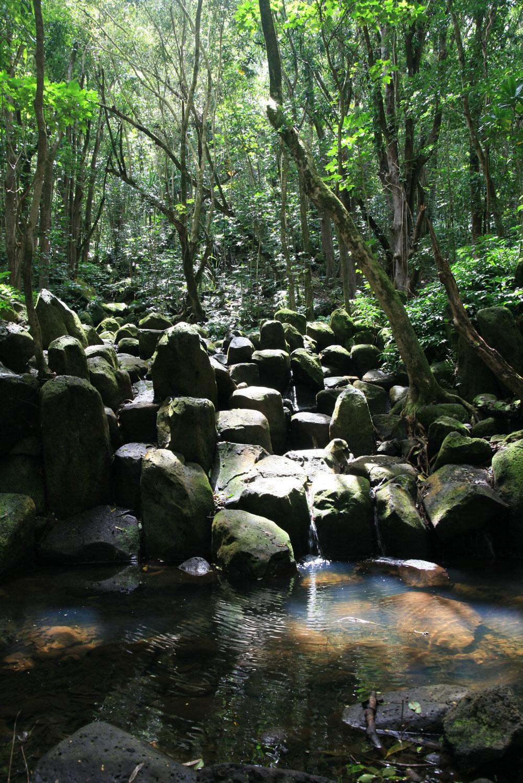 Kauai-Wanderung-im-Regenwald