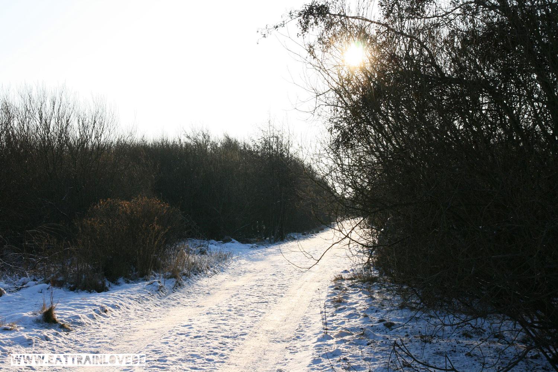 Laufen-im-Winter