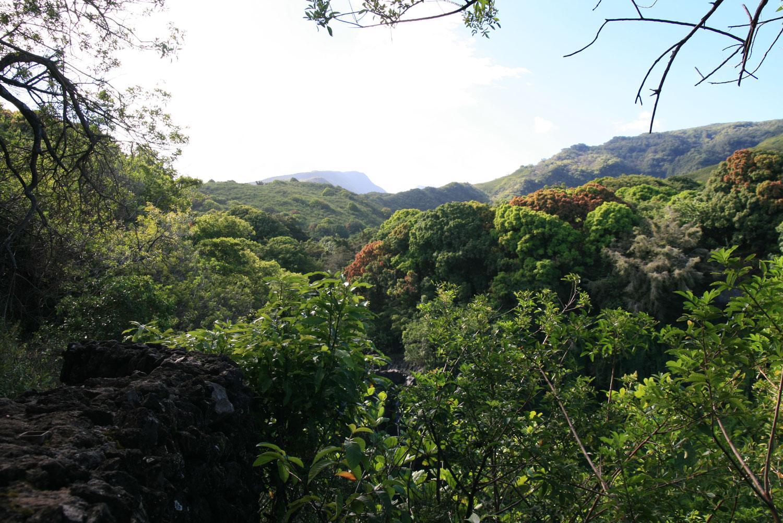 Maui-Regenwald-von-oben