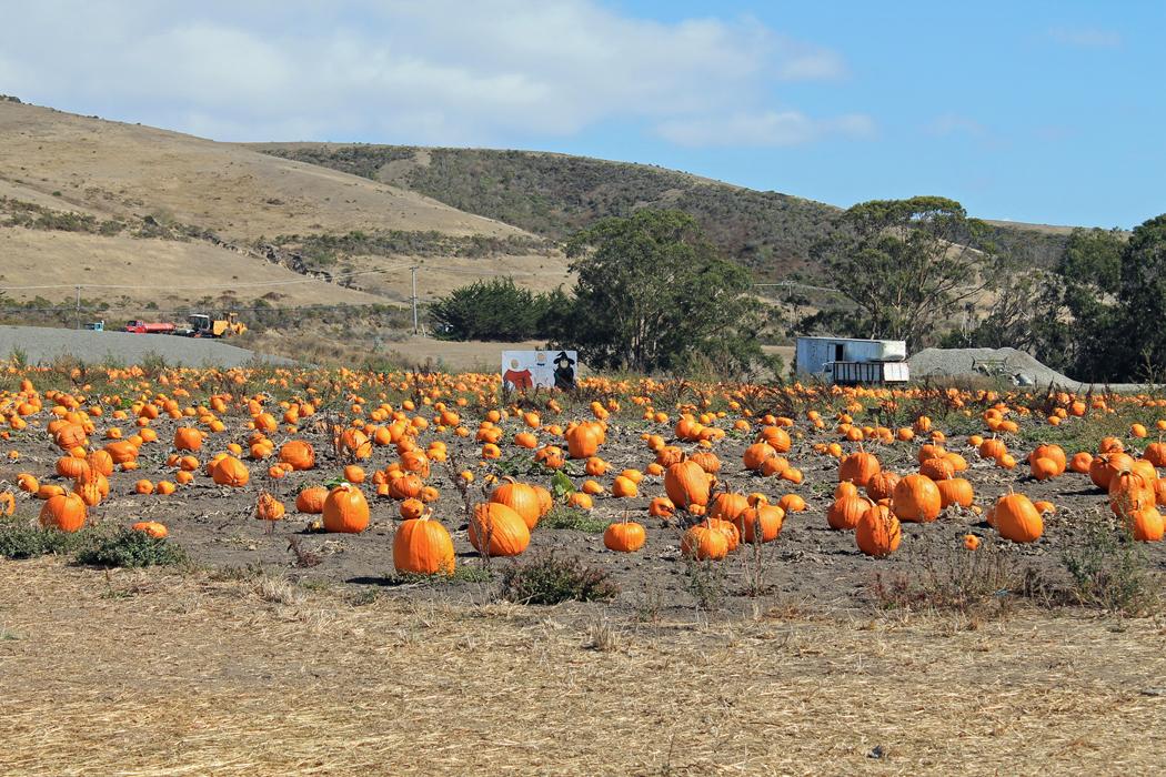 Pumpkin Patch Kalifornien