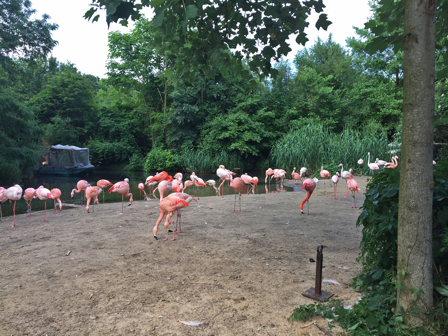 Zoo-Run-Hannover-Tiere