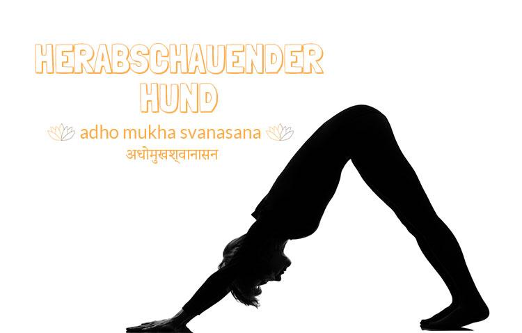 adho-mukha-svanasana-herabschauender-hund