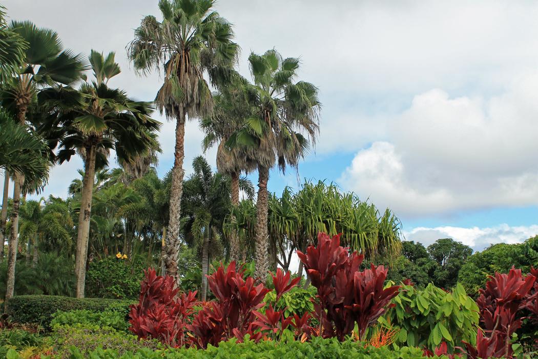 Dole Garden Plantation5
