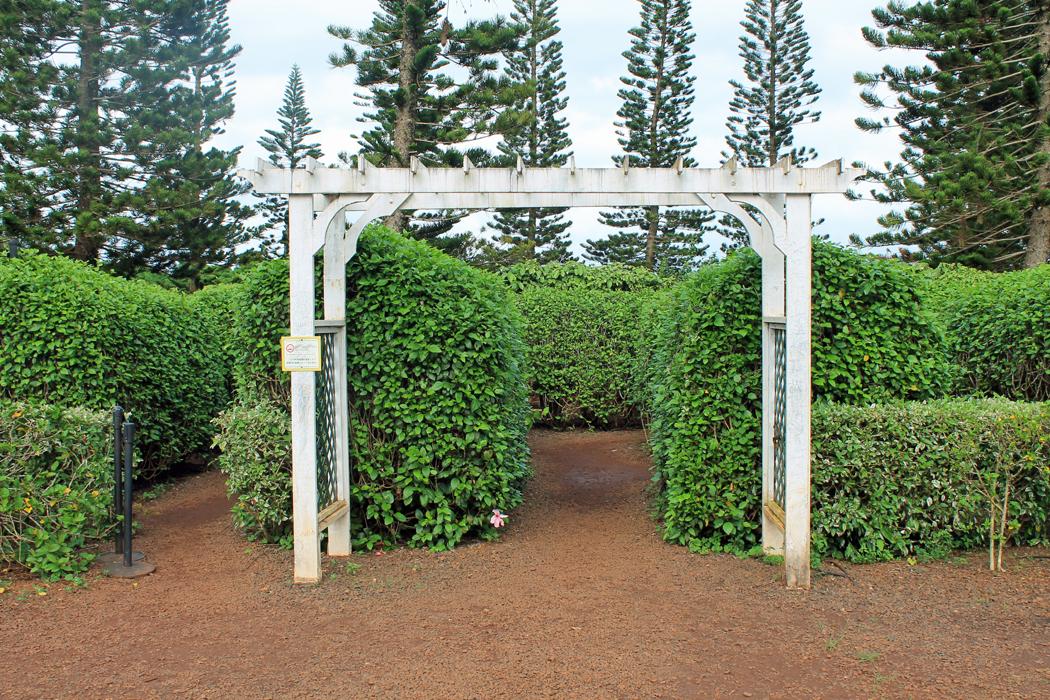 Dole Pineapple Garden Maze1