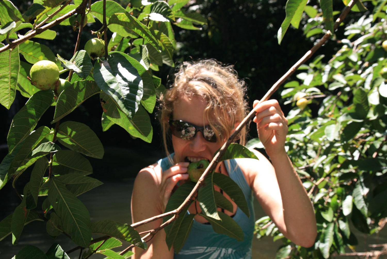 Maui-Früchte-vom-Baum