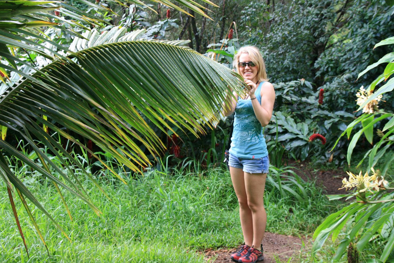 Maui-Regenwald
